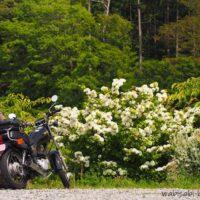 オオデマリとオートバイと女性ライダー