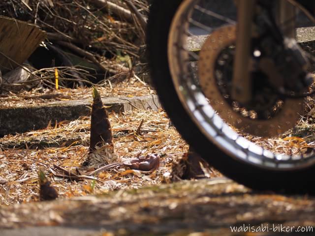 タケノコとオートバイのタイヤ