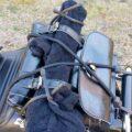 バイクへの三脚積載☆ギアータイと靴下を利用した固定