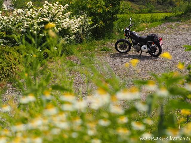 白いお花とオートバイ