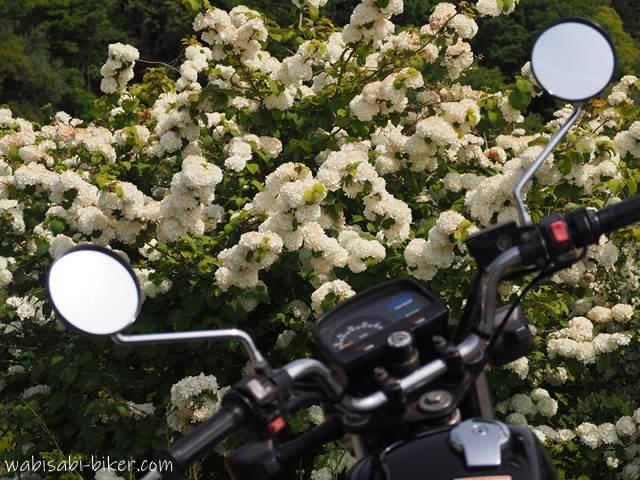 オオデマリとオートバイ