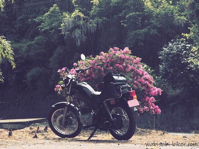 ツツジと藤の花とタケノコとオートバイ