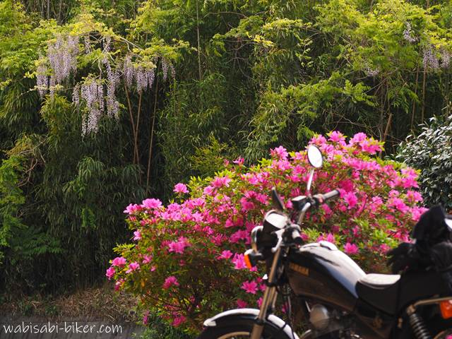 ツツジと藤の花とオートバイ