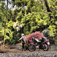 ツツジと藤の花とオートバイと女性ライダー