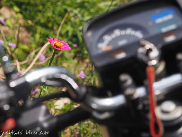 百日草とオートバイ