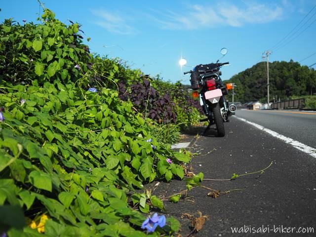 萎れた朝顔とオートバイ