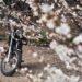 梅の花とオートバイ
