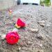 庭に落ちた椿の花