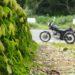 苔とバイクのある風景☆YAMAHA SR125